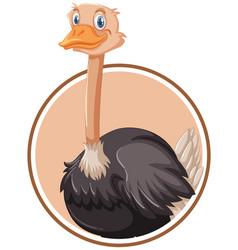 a ostrich sticker template vector image