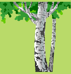 Cartoon birch trees with white trunk and green vector