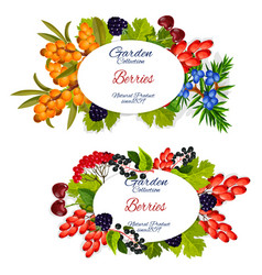 Organic healthy natural forest berry fruits vector