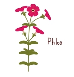 Phlox vector