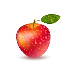 Realistic Fresh Red Apple With Drops vector