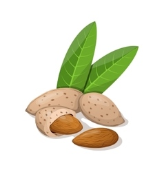 Almonds with leafs isolated on white vector image