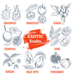 exotic fruits collection hand drawn vector image vector image