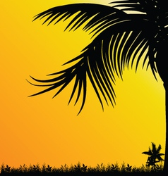 palm tree for background black vector image