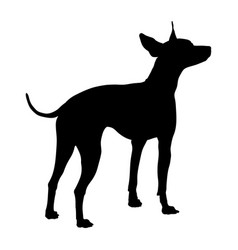 american hairless terrier silhouette vector image
