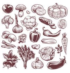 hand drawn vegetables various vintage hand drawn vector image