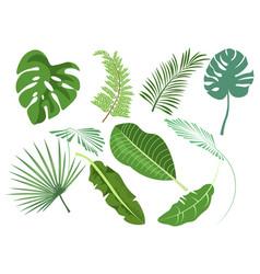 leaves set various plants vector image