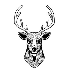 deer head isolated on white background design vector image