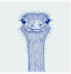 ostrich sketch head closeup on lined paper vector image