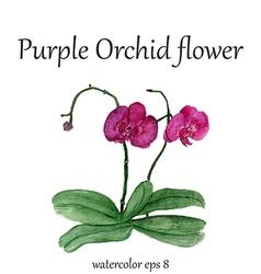 Purple orchid watercolor flower vector