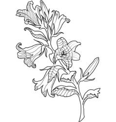 cornflower engraved vector image vector image