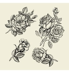 Flowers Hand drawn sketch flower rose dogrose vector