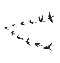 flying birds flock silhouette swallows sea gull vector image
