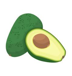 green avocado slice ripe fruit with big seed vector image