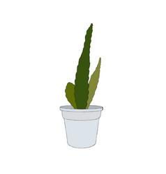 Hand drawn cactus in a pot vector