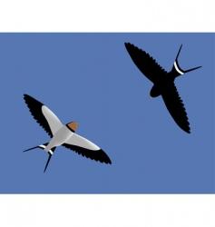 Swallows vector