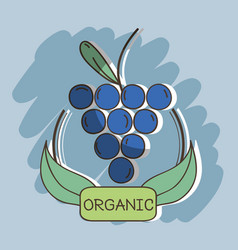 Fresh grape organ fruits with leaves vector