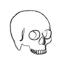 contour skeleton of the human skull icon vector image