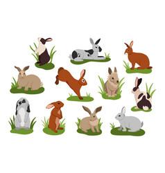 Cartoon rabbit cute bunnies with various fur vector