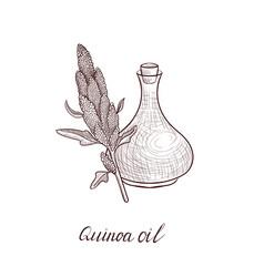 drawing quinoa oil vector image