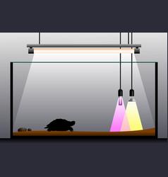 terrarium equipment vector image