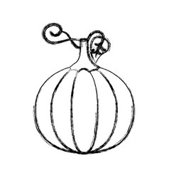 contour pumpkin vegetable icon vector image