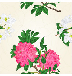 seamless texture flowers pink and white vector image vector image