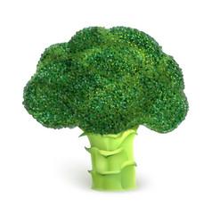 broccoli icon realistic style vector image