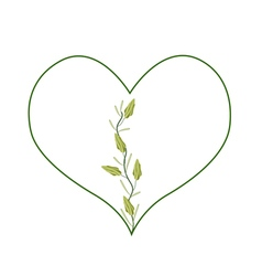 Fresh Cardamon Pods in A Beautiful Heart vector