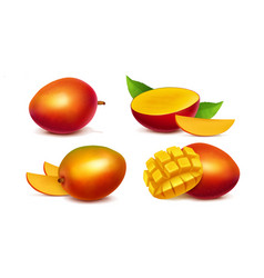 mango whole and sliced realistic vector image