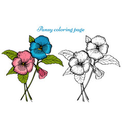 pansy flower coloring page vector image