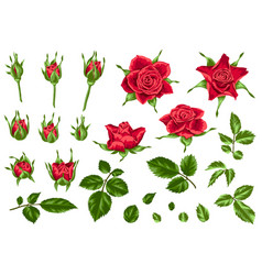 Set of decorative red roses vector
