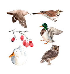 Set watercolor duck bird on white background vector