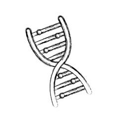 huma dna symbol vector image