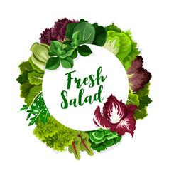 Lettuce salad leaves spinach arugula cabbage vector