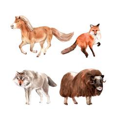 Set watercolor horse fox yak on white vector