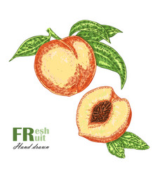 peach branch isolated on white background fruit vector image vector image