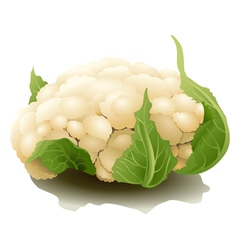 Cauliflower isolated vector image vector image
