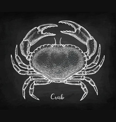 chalk sketch of edible crab vector image