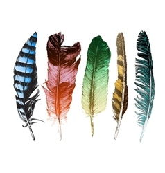 Colorful hand drawn feathers on white background vector image