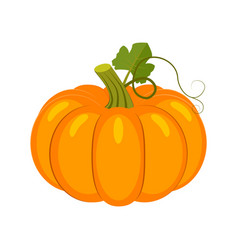 colorful pumpkin isolated on vector image