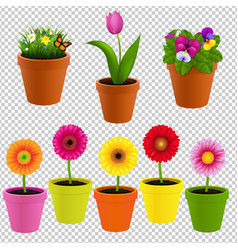 Flower in pot collection vector