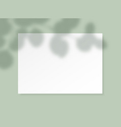 White horizontal paper blank with eucalyptus vector