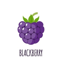 Blackberry fruit icon in flat style vector image
