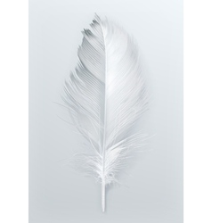 Bird feather icon vector image
