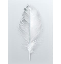 Bird feather icon vector