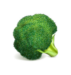 Green broccoli icon realistic style vector