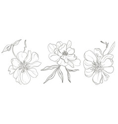 hand-drawn black white peony flowers drawings vector image