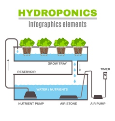 Infographic Hydroponic vector image