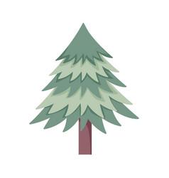Pine tree foliage botanical on white background vector